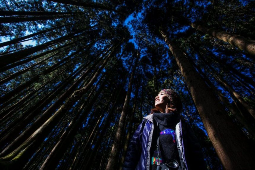At the Alishan Forest Recreation Area