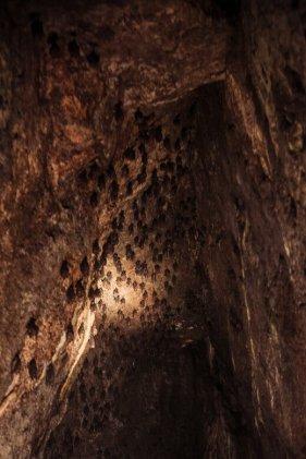 Bats inside Yuedong