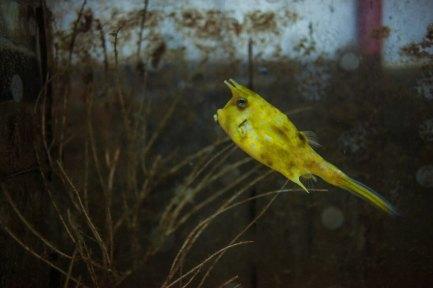 Fish at Chihsing Tan Katsuo Museum