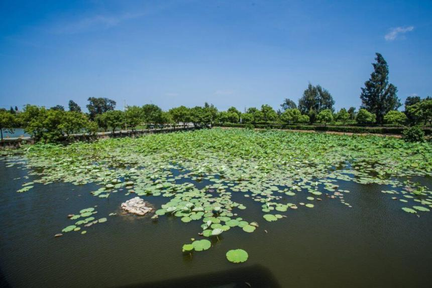 Pond adjacent to Shuangli Wetlands Nature Center
