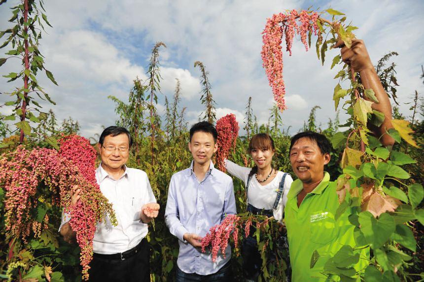 taiwan scene_mytaiwantour blog_quinoa farm in taiwan
