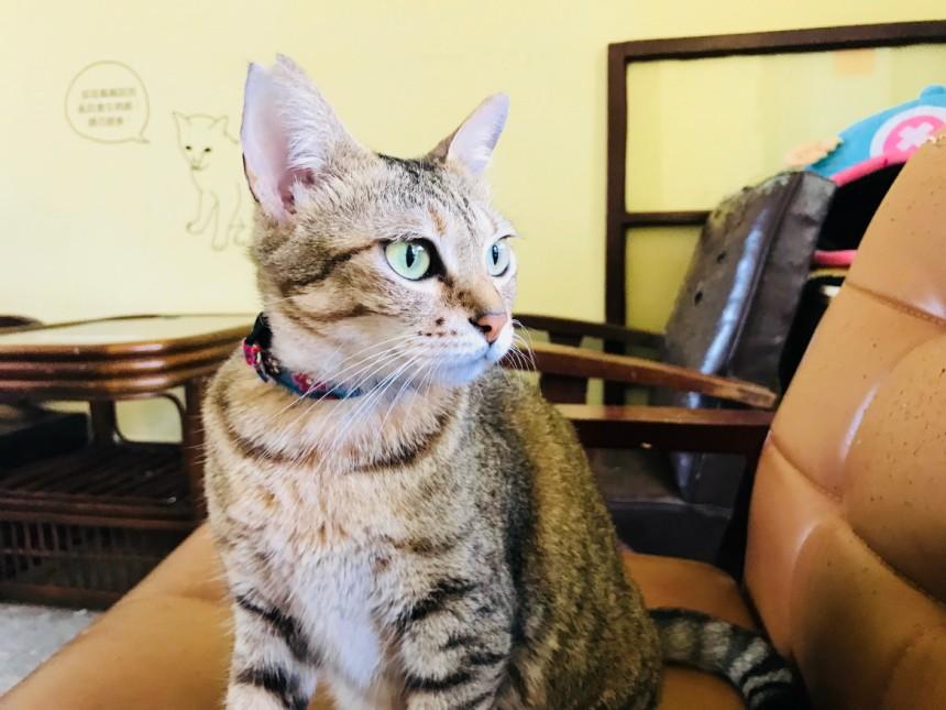 taiwan-scene-cat-cafe-in-taiwan-Lang-Lang-01.jpg
