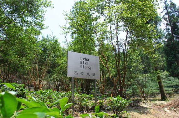 Contract Farm in Shiding, New Taipei City (image source: Cha Tzu Tang)
