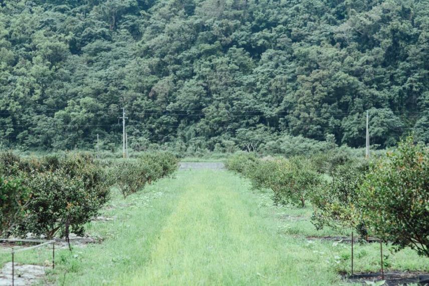 Contract farm in Nan'ao, Yilan (image source: Cha Tzu Tang)